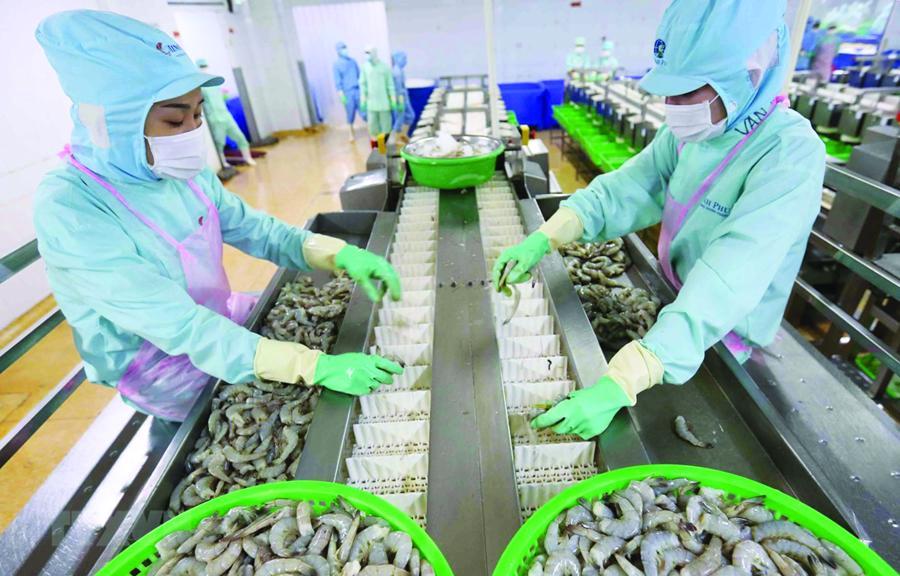 Dự báo 3 tháng tới nguyên liệu tôm sẽ thiếu trầm trọng, doanh nghiệp không thể đáp ứng đơn hàng cho đối tác nước ngoài những tháng cuối năm.
