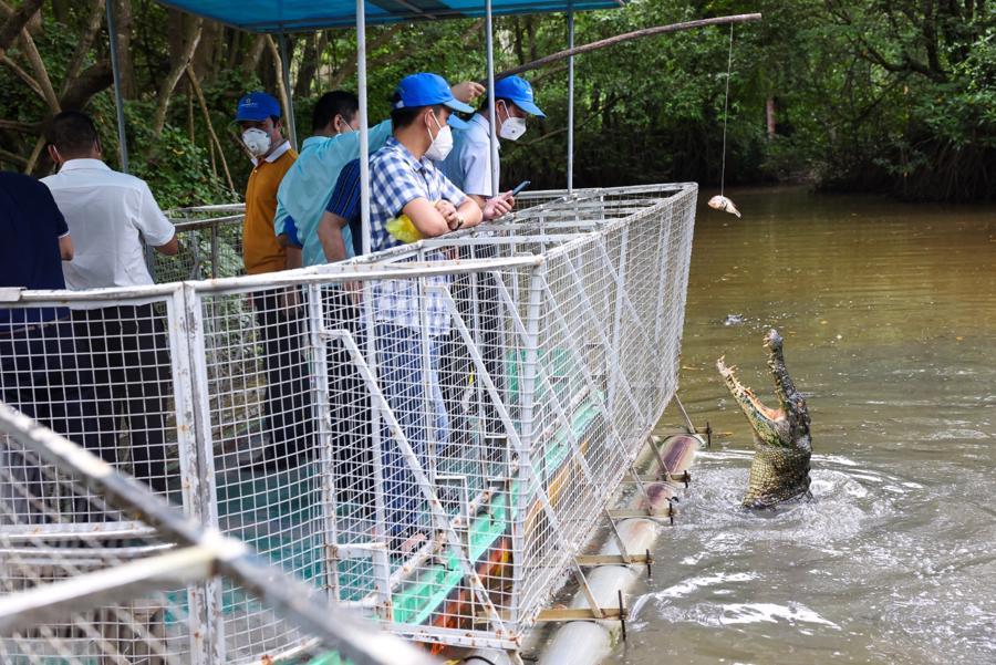 Hầu hết du khách là các y bác sĩ ở miền Bắc nên rất thích thú với trải nghiệm đi ca nô, chiêm ngưỡng cảnh quan sông nước kỳ thú ở Cần Giờ.
