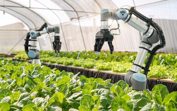 Ứng dụng robot, AI và giải pháp Agritech tại một nhà vườn.